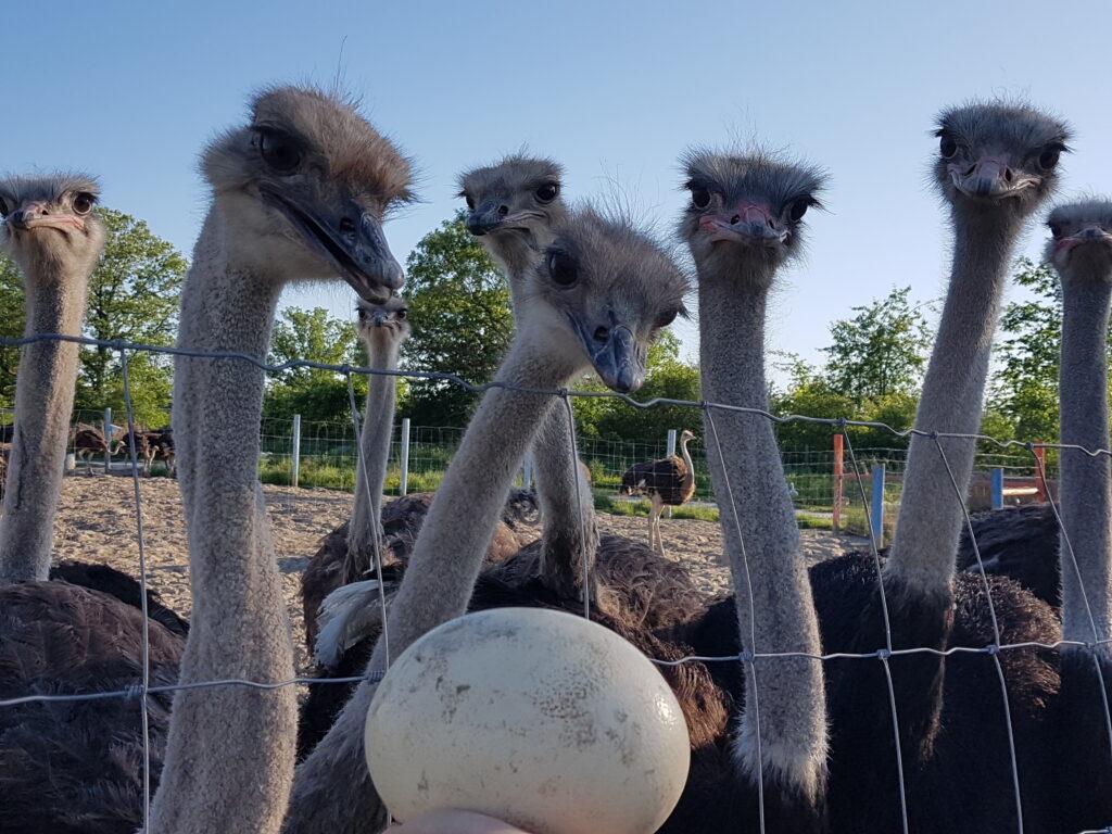 Ostrich Land Store