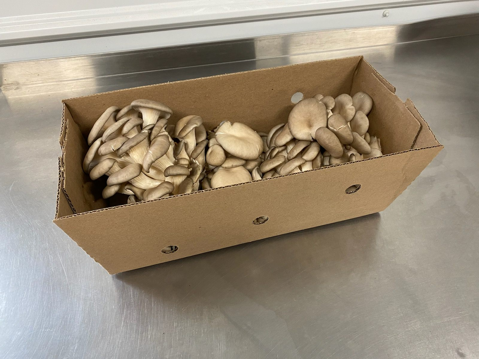 Ostrich Land Store - mushrooms oyster