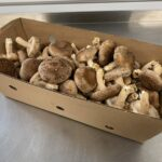 Ostrich Land Store - Mushrooms Shiitake